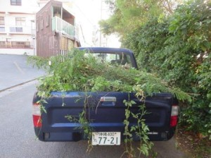 トラックに満載\(^o^)/